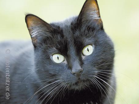 HCM: Frühe Reaktion kann Tierleben retten