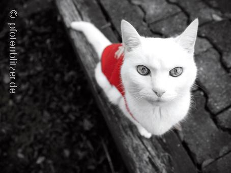 Gelenkschmerzen bei Katzen erkennen