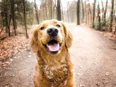 Tularämie: Haustiere könnten sich anstecken